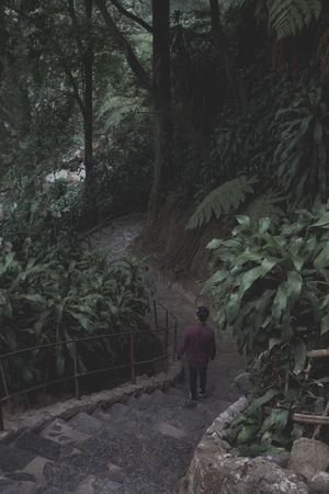Going Down Tropical Moody Nature Moody Moody Green Tree Plant Real People One Person Growth Lifestyles Forest