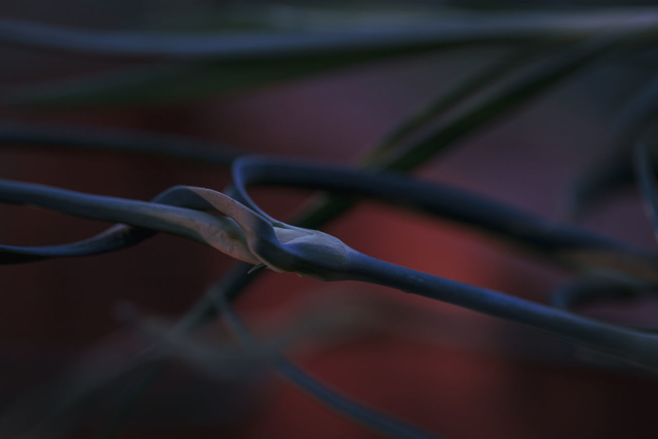 CLOSE-UP OF BARBED WIRE AGAINST FENCE