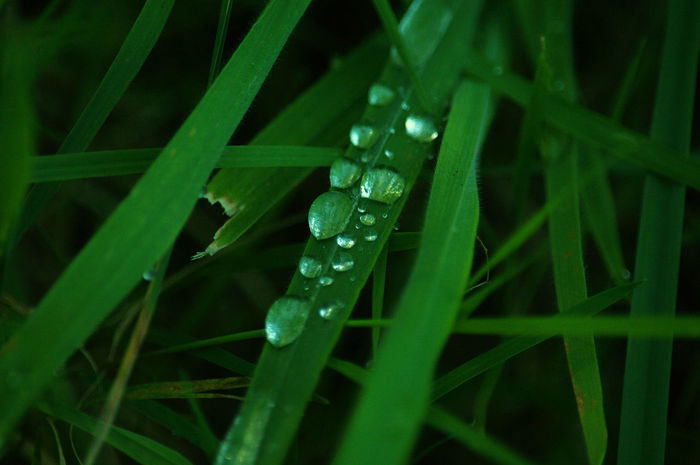 hidden treasures Blade Of Grass Day Dew Drop Focus On Foreground Grass Green Macro Photography No People Plant
