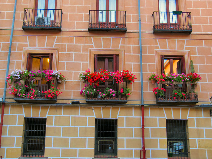 Potted plants on balconies of buildings