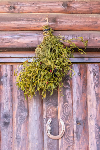Low angle view of plant growing against wooden fence