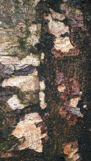 Surfaces And Textures Surface Textured  Close-up Full Frame Backgrounds Beauty In Nature Nature Day Outdoors Tree Tree Trunk Bark Mixcolour Brown Green Rough Solid EyeEmNewHere