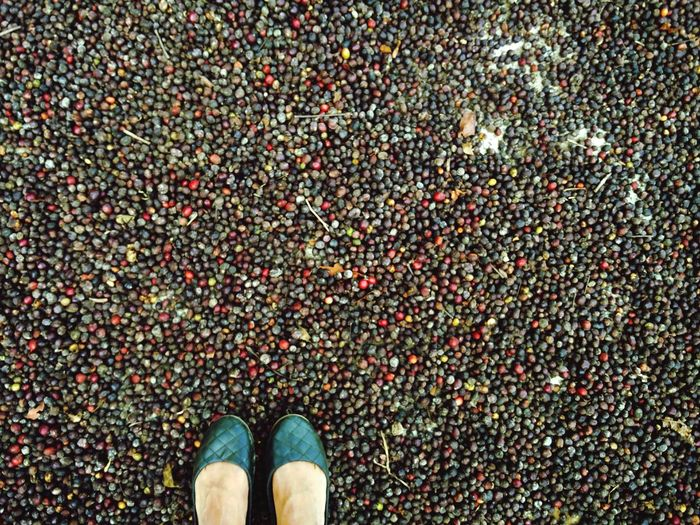 Showcase: February Harvest Season Coffee Sun Drying Coffee Daily Life Beautiful Colourful Everybody Loves Their Coffee Love Weather In February Lovin Mytinyfeet Shoes Colourcoding Camoflauging Incredible India India