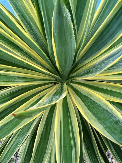 Plant Beauty In Nature Close-up Day Freshness Green Color Growth Leaf Nature No People Outdoors Palm Tree