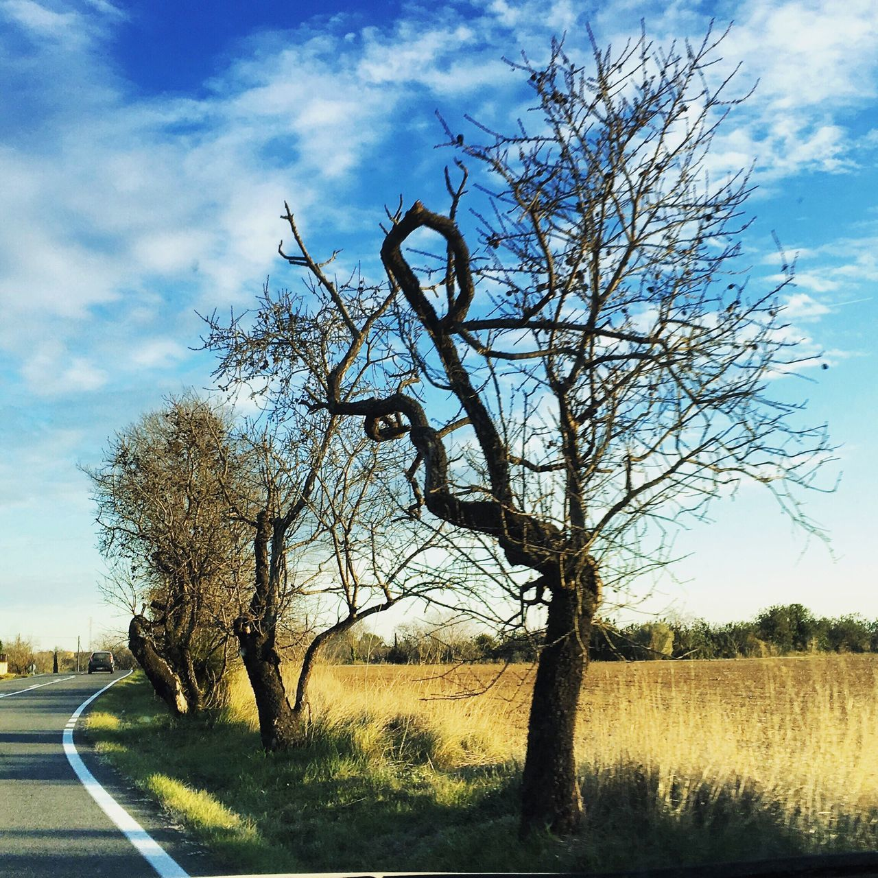 bare tree, tree, landscape, sky, road, day, nature, tranquility, outdoors, no people, beauty in nature, grass, scenics