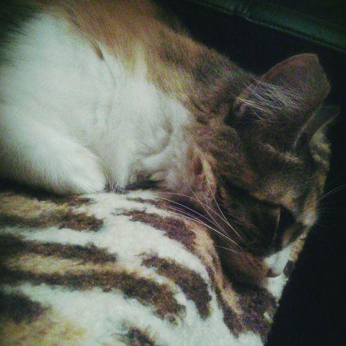 Mittens Cat