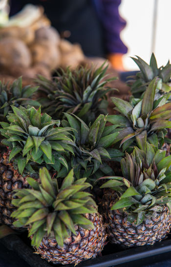 Close-up of succulent plant in market