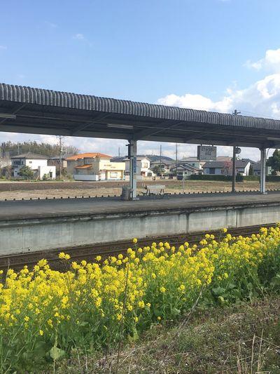 菜の花と光風台駅
