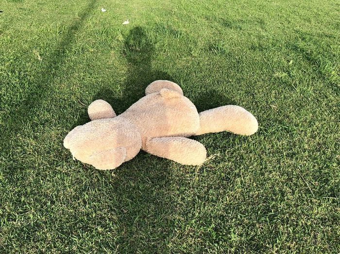 High angle view of stuffed toy on field