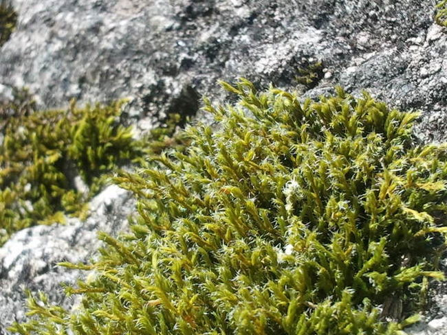 Still waiting! Moss And Lichen Nature_ Collection  The Purist (no Edit, No Filter) Taking Photos