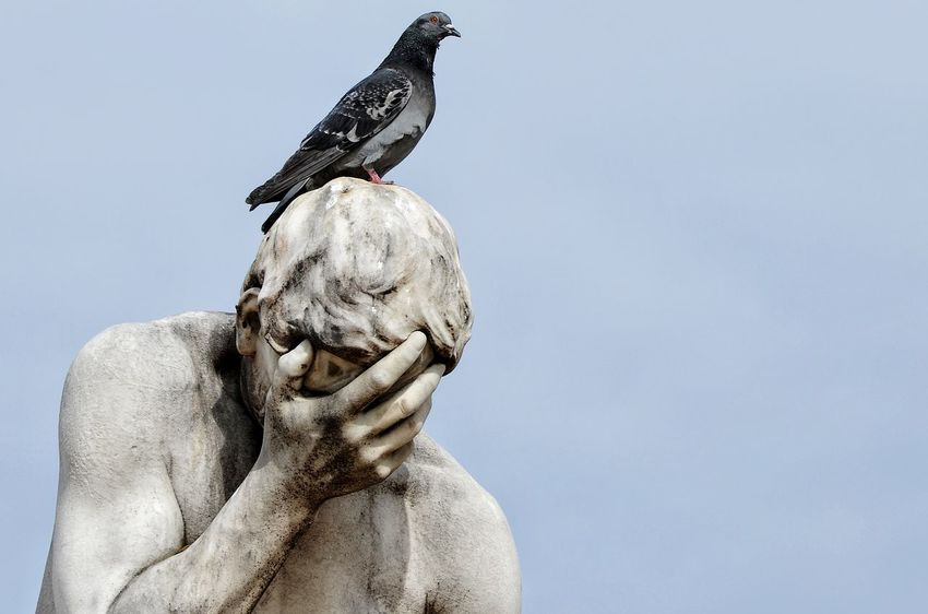 Ironic  Citywildlife EyeEm Selects Bird Statue Day Sculpture No People Outdoors Perching Nature Sky Close-up Animal Themes