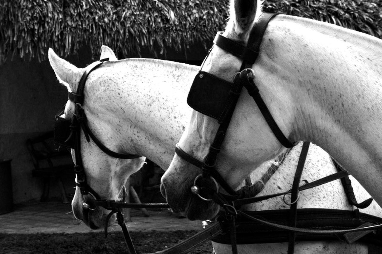 horse, domestic animals, animal themes, mammal, livestock, one animal, outdoors, no people, day