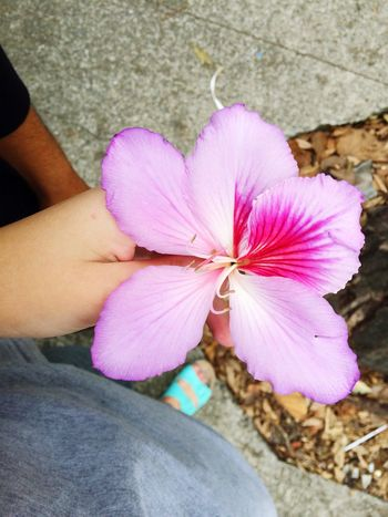 Withiphone 🌺