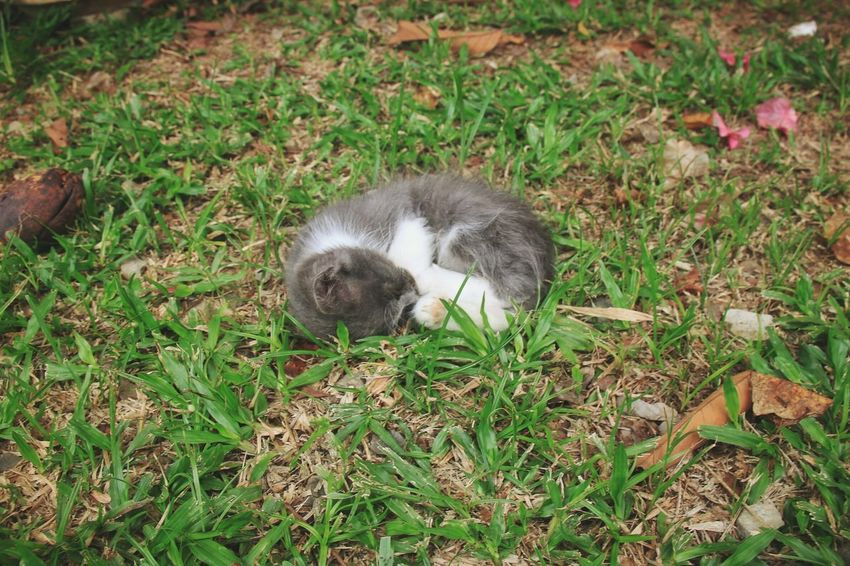 A kitten fall asleep on a grass Animal Themes One Animal Grass Mammal Field High Angle View Nature Green Color No People Day Outdoors Animal Wildlife Cat Kitten Adorable Sleep Sleepy Fur