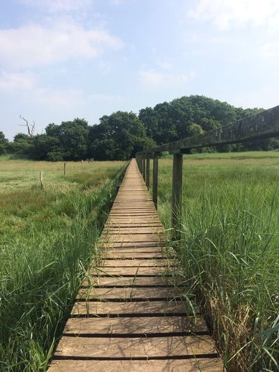 Board walk Wild Nature Meddows Marsh Land I O W Isle Of Wight  Familybwalks Simplicity Zen Peace Plant Sky Tree Growth Nature Tranquility No People