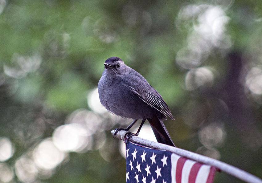 EyeEm Best Shots EyeEm Gallery Animal Animal Themes Animal Wildlife Animals In The Wild Beauty In Nature Bird Close-up Day Focus On Foreground Metal Nature No People One Animal Outdoors Perching Plant Raven - Bird Tree Vertebrate Zoology