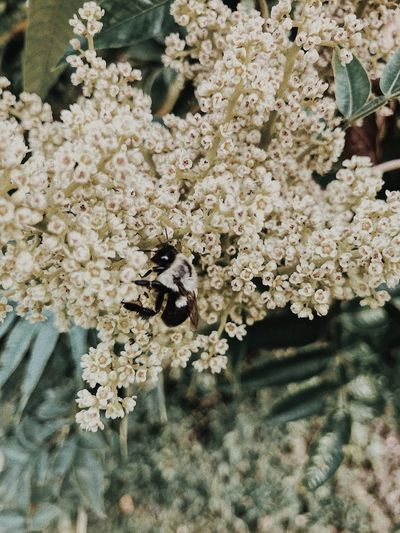 Beesandflowers Beesofeyeem Wildflowers In Bloom Lightroom Edit Vscocam Lowsaturation Flowerandinsects Bumble Bee Bee 🐝 No People Nature Close-up Growth Day Plant Beauty In Nature Outdoors Backgrounds Fragility White Color