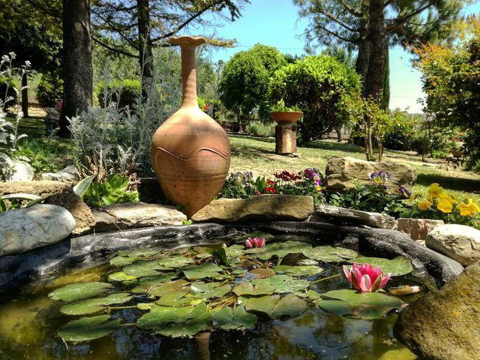 Giardino Verde Anfora Stagno Estate Tree Water Flower Close-up Plant