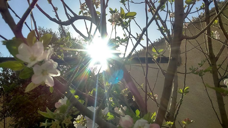 Spring Flowers EyeEm Best Shots Close Up Apple Blossom Sunrise Trees And Sky Everyday Beauty Beauty On Our Doorstep Leaves EyeEm Nature Lover