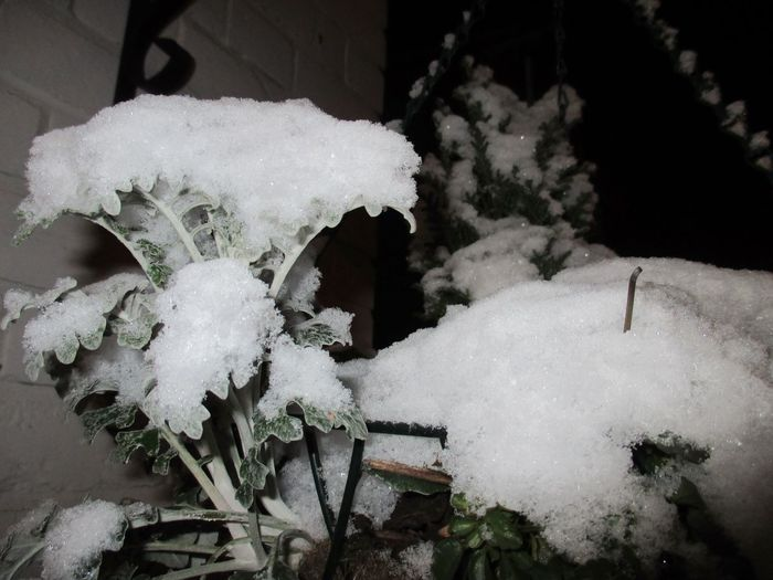 Snow ❄ Newbury Uk United Kingdom Snow Cold Temperature Plants And Flowers Hangingbasket Wintertime
