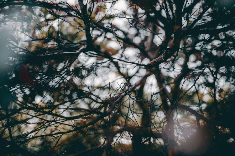 乱 Tree Plant Nature Branch Sky Beauty In Nature Environment No People Forest Backgrounds Outdoors Tranquility Growth Day Pinaceae Full Frame Plant Part Leaf Pine Tree Low Angle View