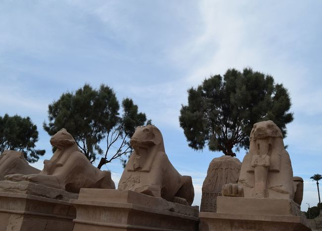 History Tree Travel Destinations Ancient Ancient Civilization Sculpture Sky No People Day Outdoors Statue Statues And Monuments The Street Photographer - 2017 EyeEm Awards Ancient Remains Nikon Photography Egyptphotography Ancient Egypt Travel Ancient Scuplture Temples Tourism Photo