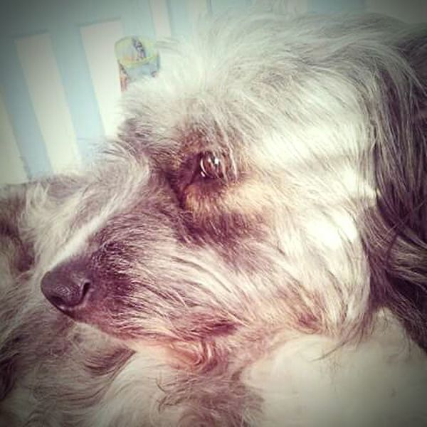 Muffin Terriermix Terrier My Furbaby Happiness CeBPhotography