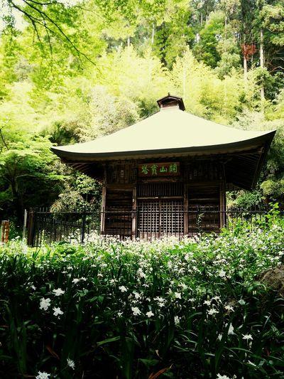 まるで天国のような The location just like the heaven. Hello World Japanese Traditional Japanese Temple Saitama , Japan 寺