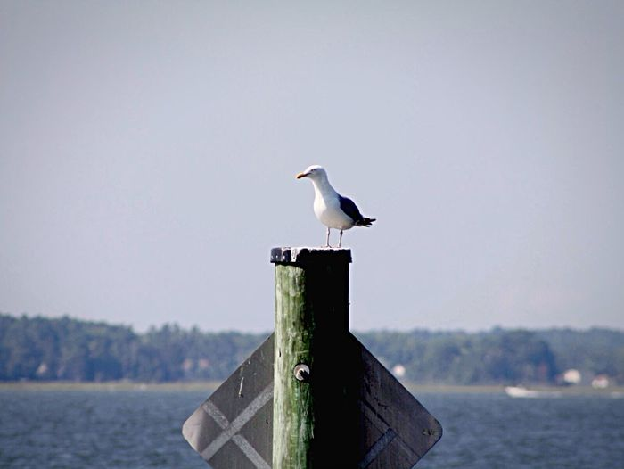 Seagull Ocean Bird Photography View Alone Perching Water Nature