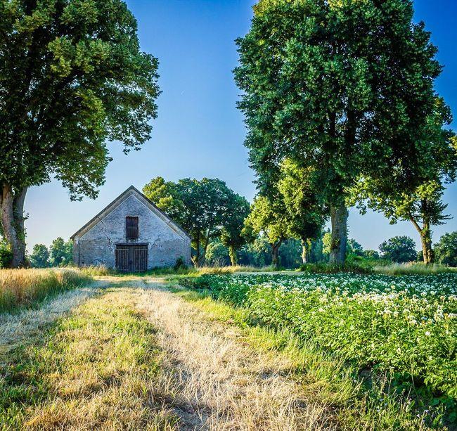 Alte Scheune || Plant Tree Architecture Built Structure Grass Field Sky