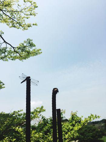 終於假日出來踏青了 The View And The Spirit Of Taiwan 台灣景 台灣情 EyeEm - Taiwan EyeEm Taiwan Travel Low Angle View No People Day Tree Outdoors Sky Green Color Nature Growth Clear Sky Close-up