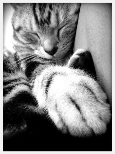 Don't wake me up at 康寧路三段噗噗宅 Don't Wake Me Up