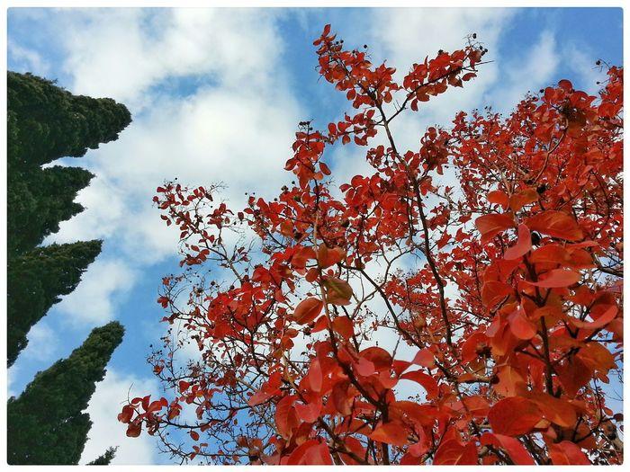 RedLeaves Sky