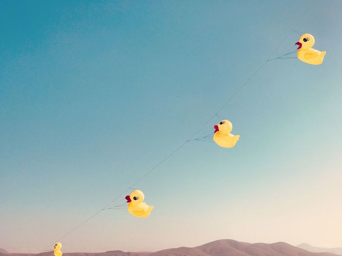 Low angle view of rubber ducks hanging on string against sky