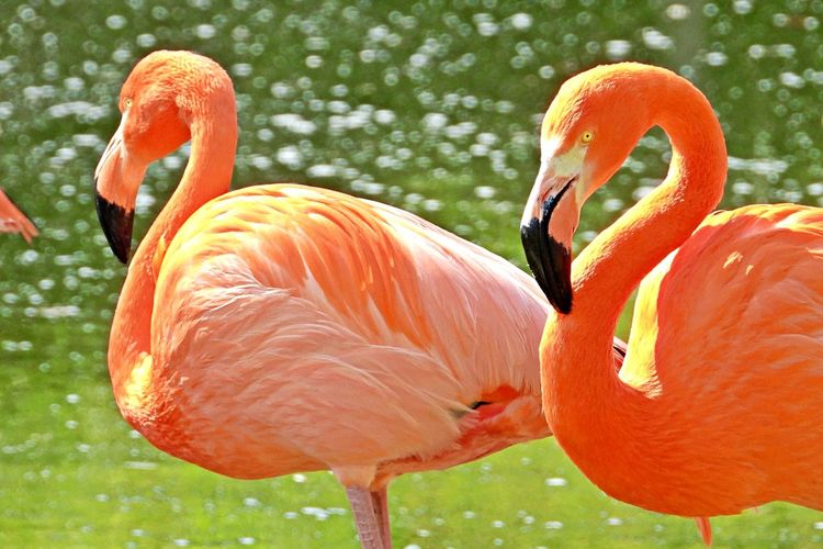 Flamingo Animal Bird Animal Themes Animals In The Wild No People Group Of Animals Animal Wildlife Orange Color Day Animal Body Part Outdoors Pink Color