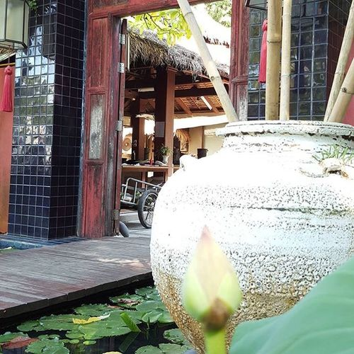 Thairestaurant Landscape Lilly Waterlilly Phuketcafe Phuketisland Entrance Picsoftheday Photooftheday Igersmalaysia Igersmalaysian Igers Likeforlike Likes4likes L4likes L4l Outdoorgardenideas Entrance to this Thai Restaurant by the sea