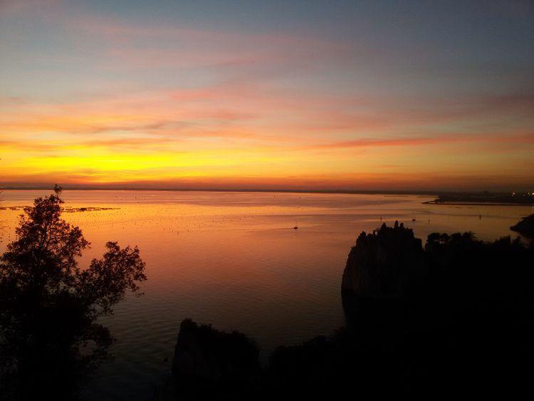 Sunset Tree Nature Beauty In Nature Castle Duino Castle Duino Trieste