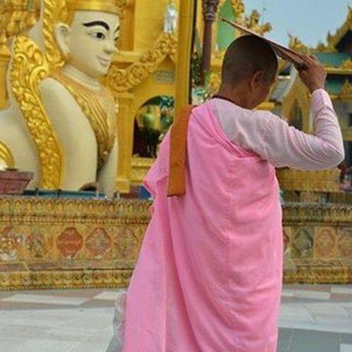 Burma Myanmar Rangoon Yangon Nuns Bhikkhuni Women Monks Buddhism Temple Pagoda Shwedagonpagoda Travel Travelshots Everydayasia Everydaylife Everydaymyanmar Peoplewatching PortraitOfAWoman