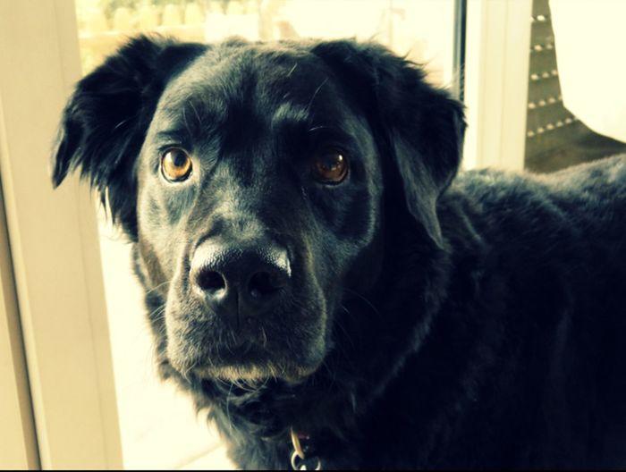 Tinka Love Einundalles Hund