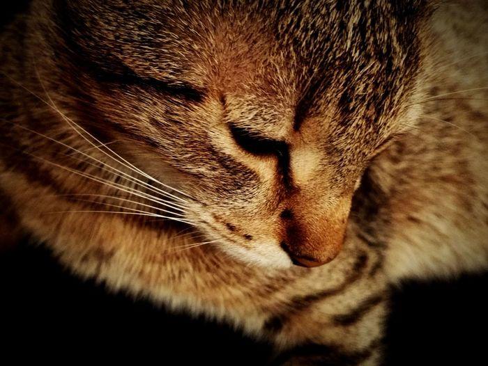 Relaxing Cheese! Hello World Kitty!  Kitten
