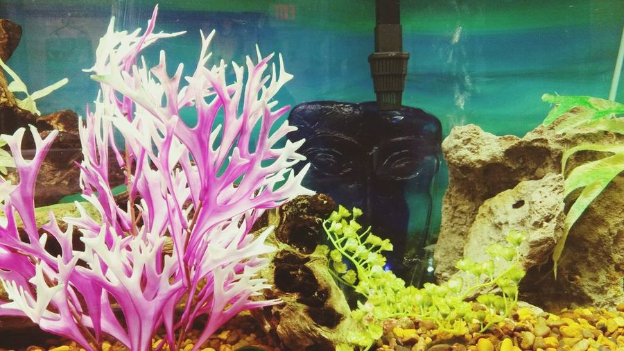 Water Sea Life Plant Underwater Beauty In Nature Aquarium Coral Nature No People Outdoors Day UnderSea