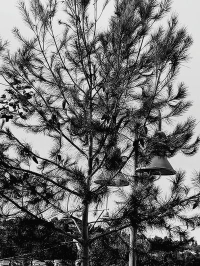 Low Angle View Tree Growth Nature No People Day Beauty In Nature Sky Branch Plant Outdoors Close-up Black And White Friday
