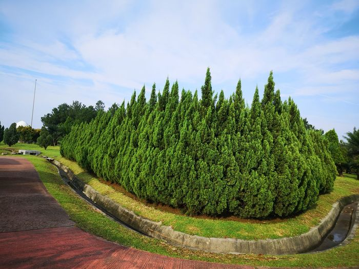 Panoramic view of garden