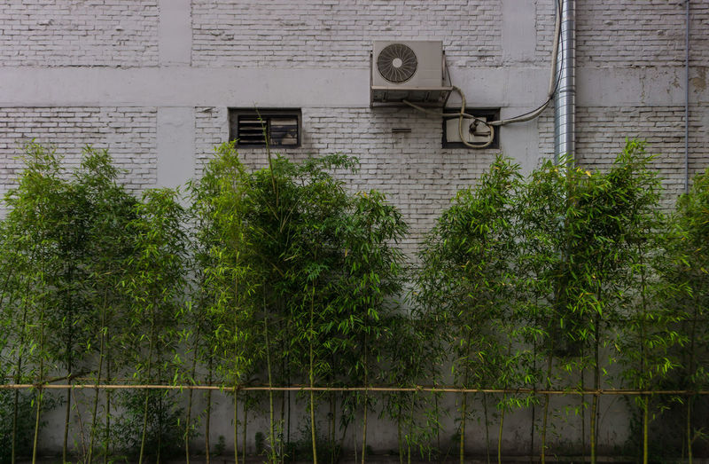 the wall with the bamboo and air-conditioning outdoor unit Brick Wall Duct Outdoor Unit Air Conditioning Outdoor Unit Bamboo Bamboo - Plant Brick Building Built Structure Gray Gray Colors Green Color Leaf Metal Nature No People Outdoors Plant Steel Pipe Tree Wall - Building Feature White Background White Color White Wall The Street Photographer - 2018 EyeEm Awards