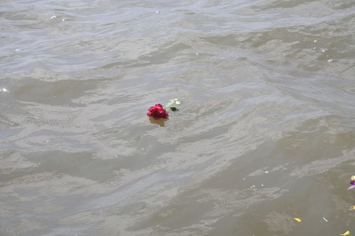 River Sea Rose - Flower Rose🌹 Water Flower High Angle View