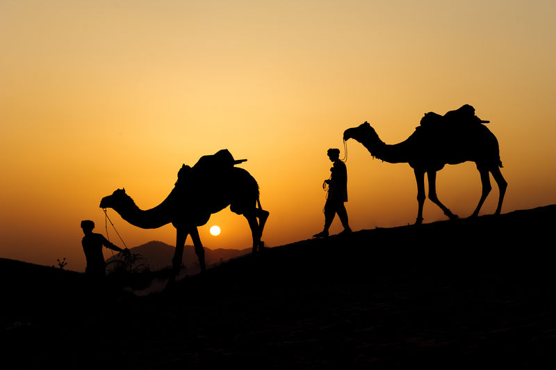 Silhouette Men Walking With Camels Against Clear Sky During Sunset