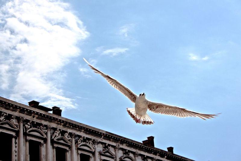 Venecia Venice Italy Venice, Italy Venice, ıtaly Sea Gull Gull Möven Venice Piazza Venise Venezia Venice Bird