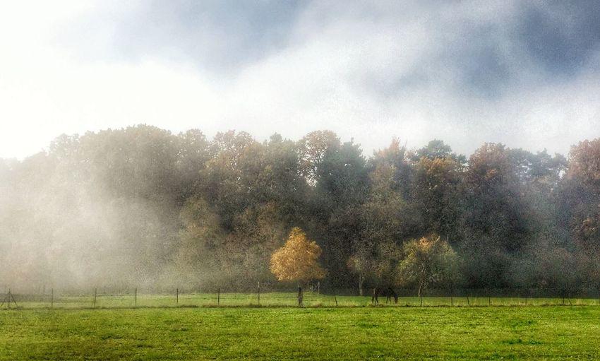 Fog comes Nebel Herbst Autumn Colors EyeEm Deutschland Tadaa Community Daswasichsehe😊