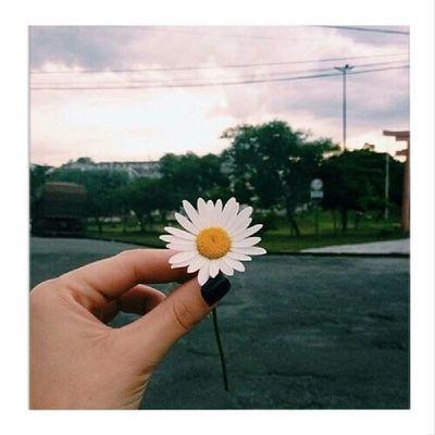 Quot Was sind eure Lieblingsblumen? Auot Gänseblümchen 😍🌼😅
