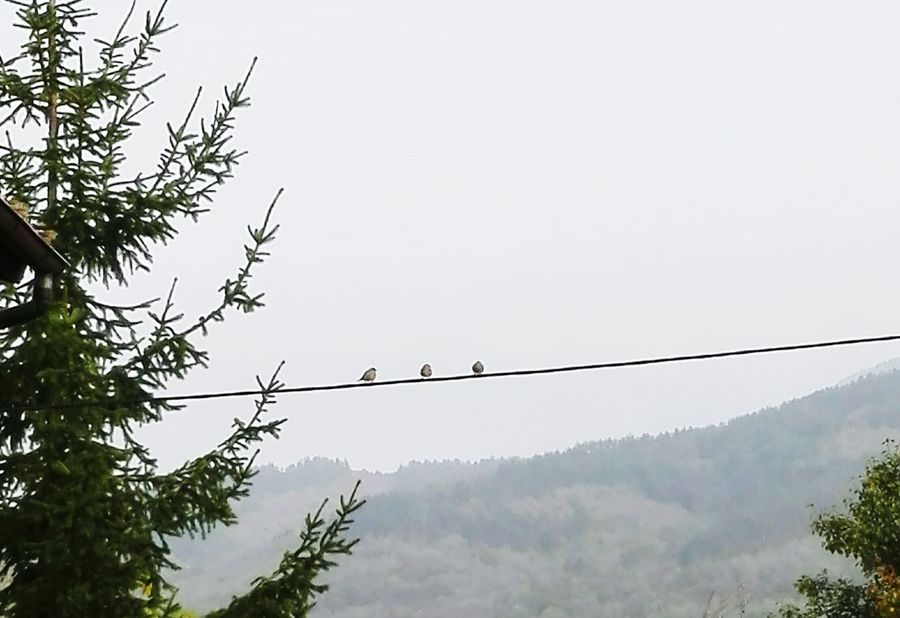 Tree Bird Animal Themes Perching Animals In The Wild Clear Sky Tranquility Nature Scenics Cable Tranquil Scene Day Growth Beauty In Nature Non-urban Scene Flying High Section Treetop Remote No People